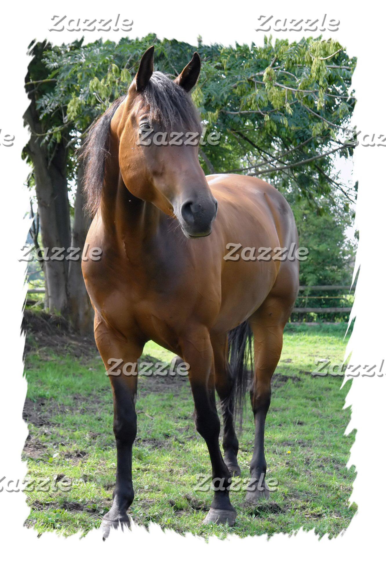 Bay Horses