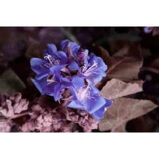 bee in blue flowers colorized purple