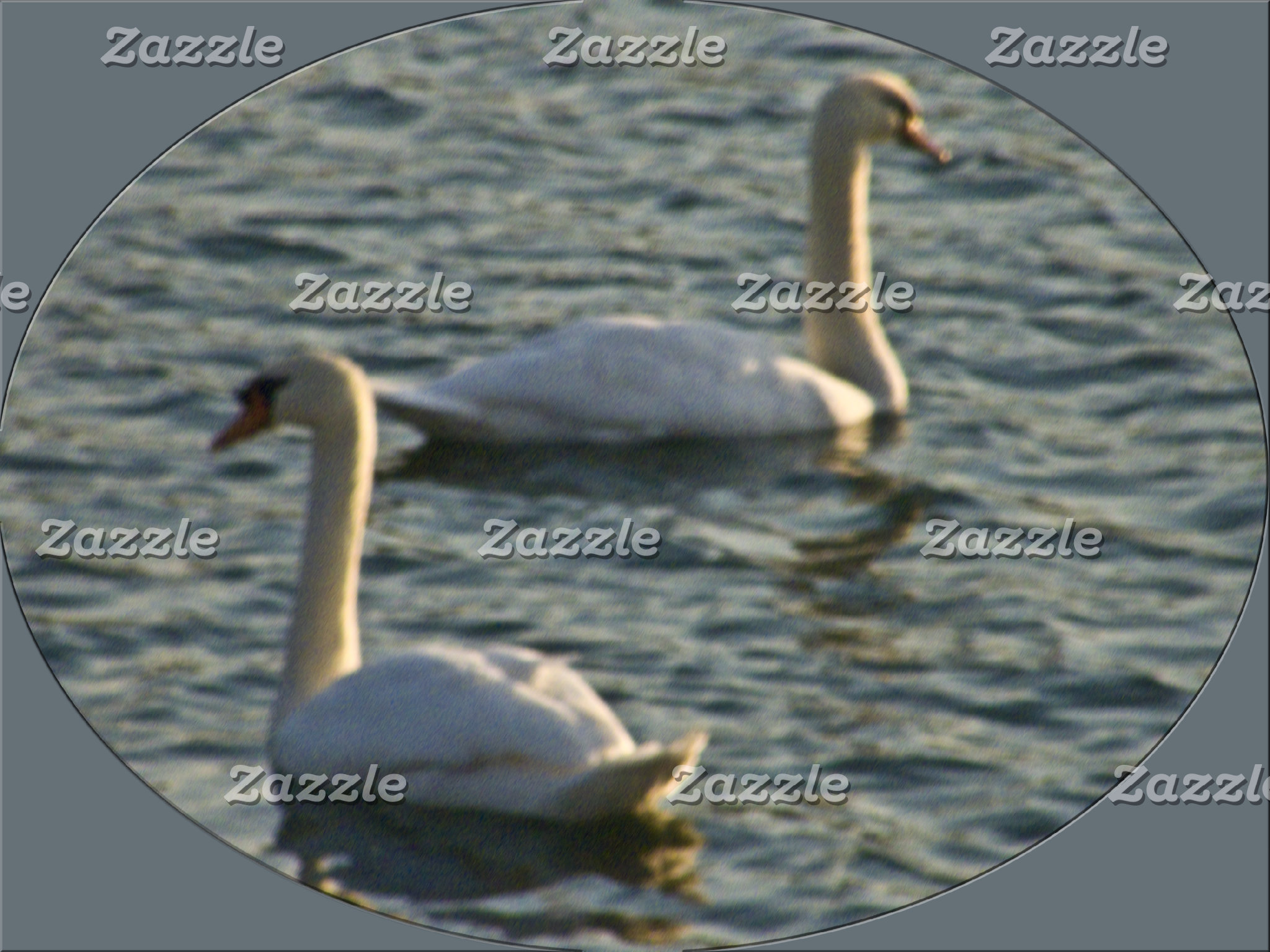 Watching Out for Each Other -- A Pair of Swans