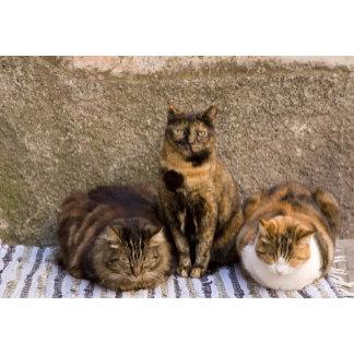 Italy, Cinque Terre, Vernazza. Three cats beside
