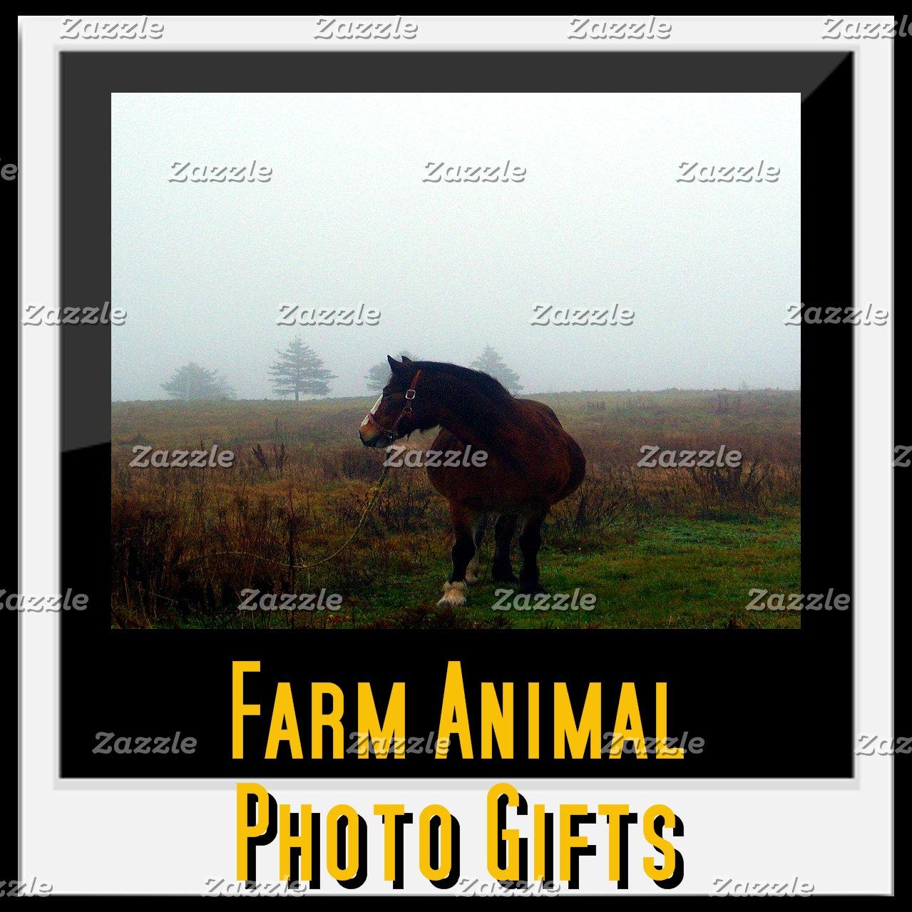Farm Animal Photo Gifts