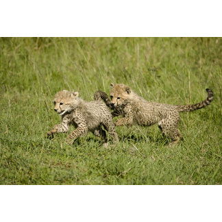Upper Mara, Masai Mara Game Reserve,