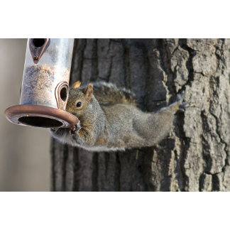 A very persistent and agile squirrel