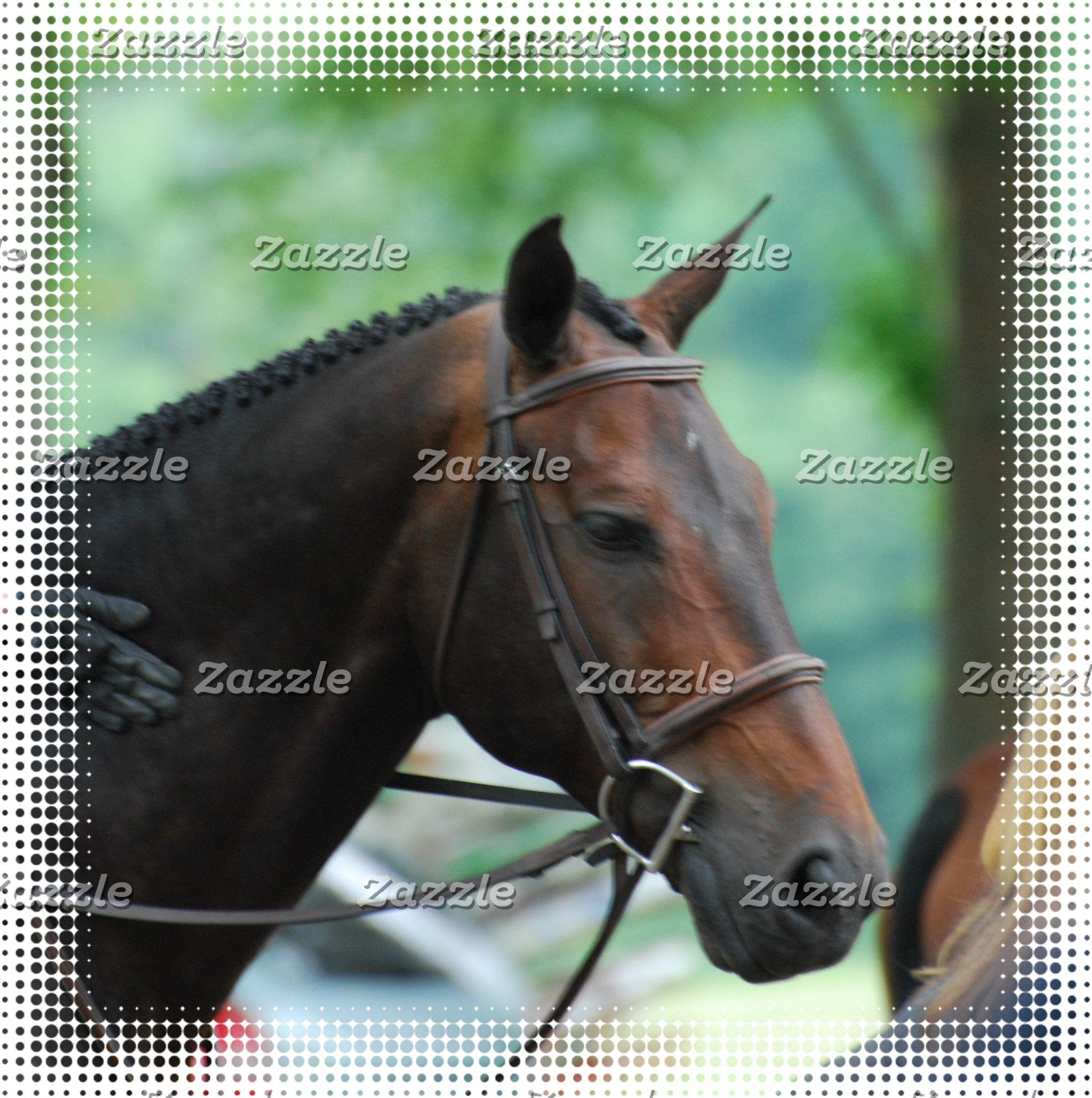 Warmblood Horses