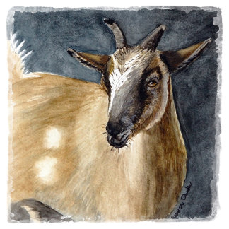 For Goat Lovers