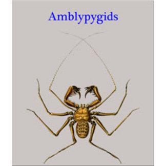 Amblypygids