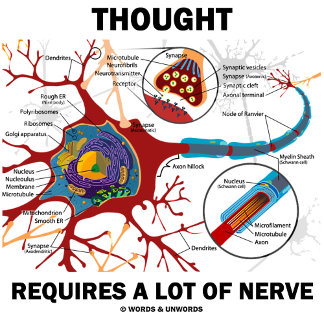 Thought Requires A Lot Of Nerve (Synapse)