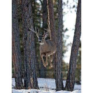 Ten-point Buck Clears Fence Bebee