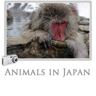 Animals in Japan