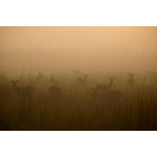 Deer herd Varma