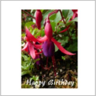 Fuchsia Pink Flower