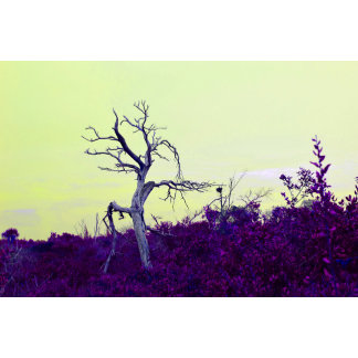 dead tree purple yellow leaves sky