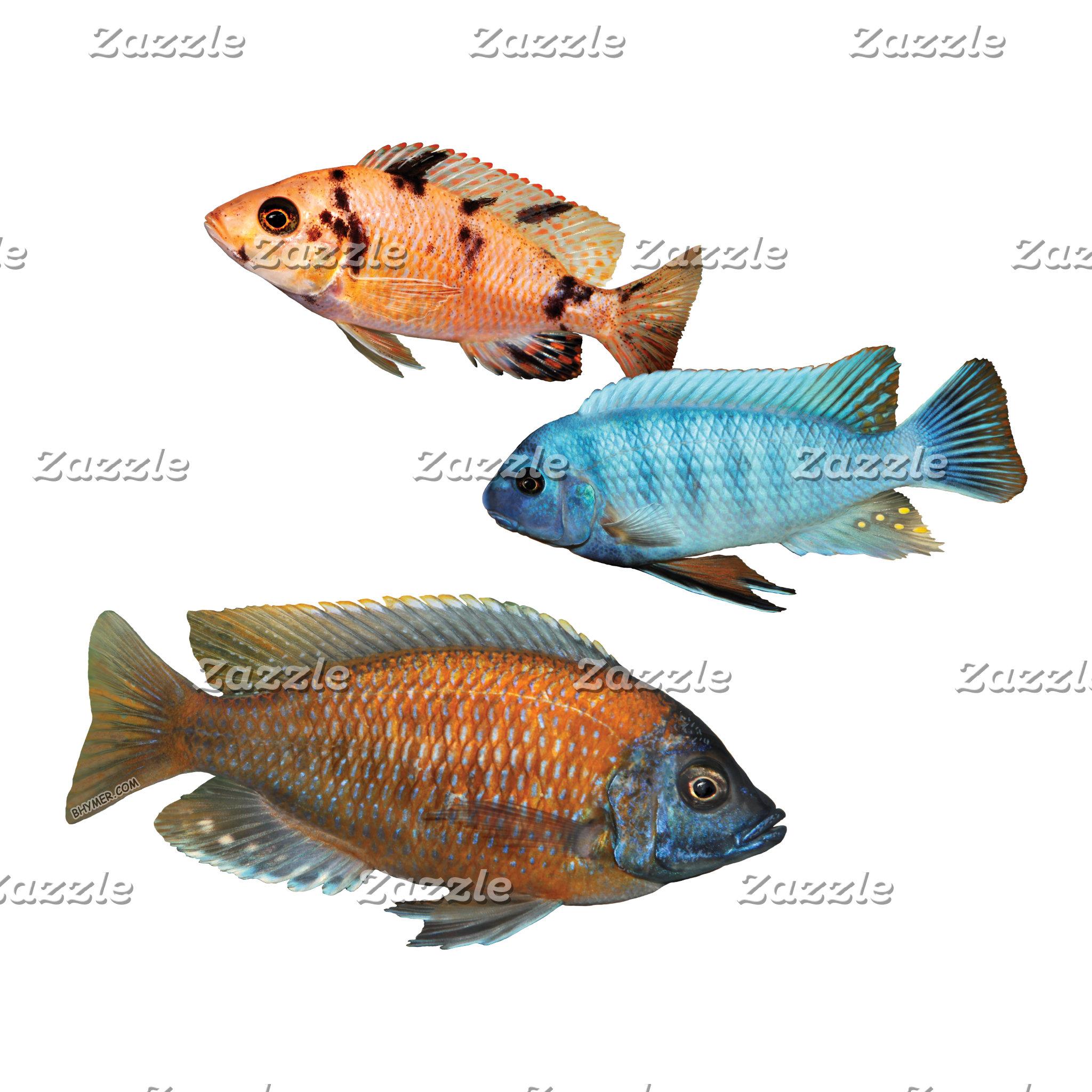 Aquarium Friends