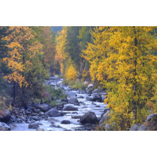 Autumn colors of forests in The Cascade 6