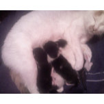 cat and babies.jpg