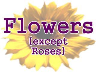 Flowers-Flower Photographs, Flower designs