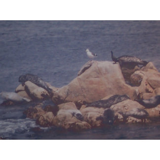 Monterey Sun Bath
