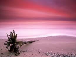 Beach & Seashells