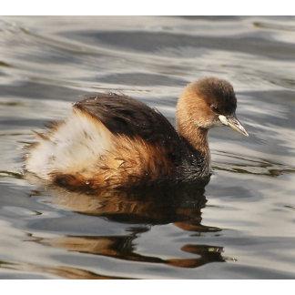 ~ Duck