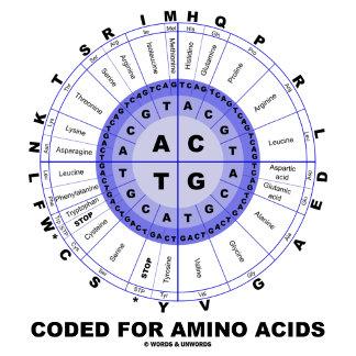 Coded For Amino Acids (DNA Code Amino Acids)