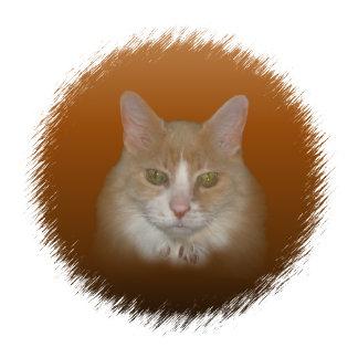 Cat *37 items,