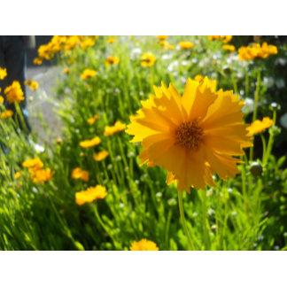 Flowers & Plants Photographs