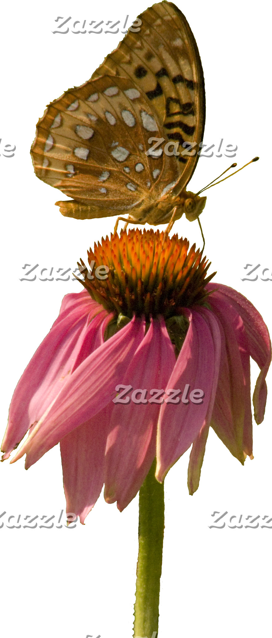 On Top of the Coneflower -- Butterfly & Coneflower