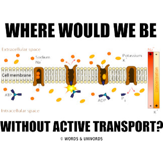 Where Would We Be Without Active Transport?