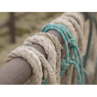 Tucson, Arizona: Ropes and hanrnesses used  on