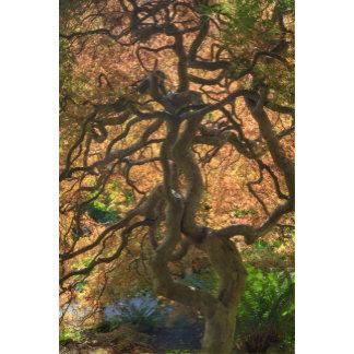 Autumn color Maple trees, Victoria, British