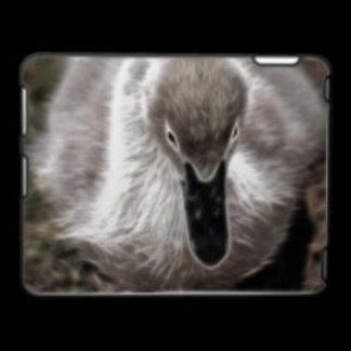 * Swans