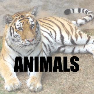 Wildlife (Animals)