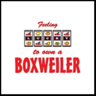 Feeling Lucky to Own a Boxweiler