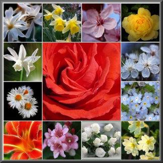 Floral Delights