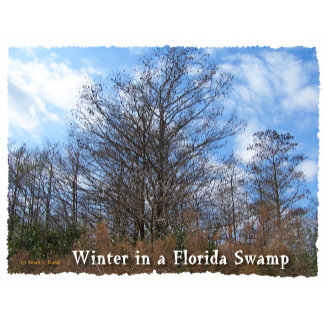 "Florida swamp ""winter in a florida swamp"" text"