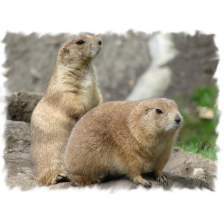 Funny Prairie Dogs