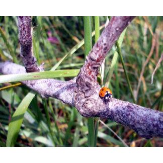 Ladybug World