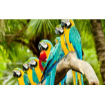 Branches-beautiful-eight-parrots-queuing-1800x2880