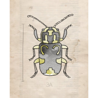 Insect Series | Green Beetle