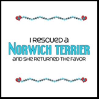 I Rescued a Norwich Terrier (Female Dog)