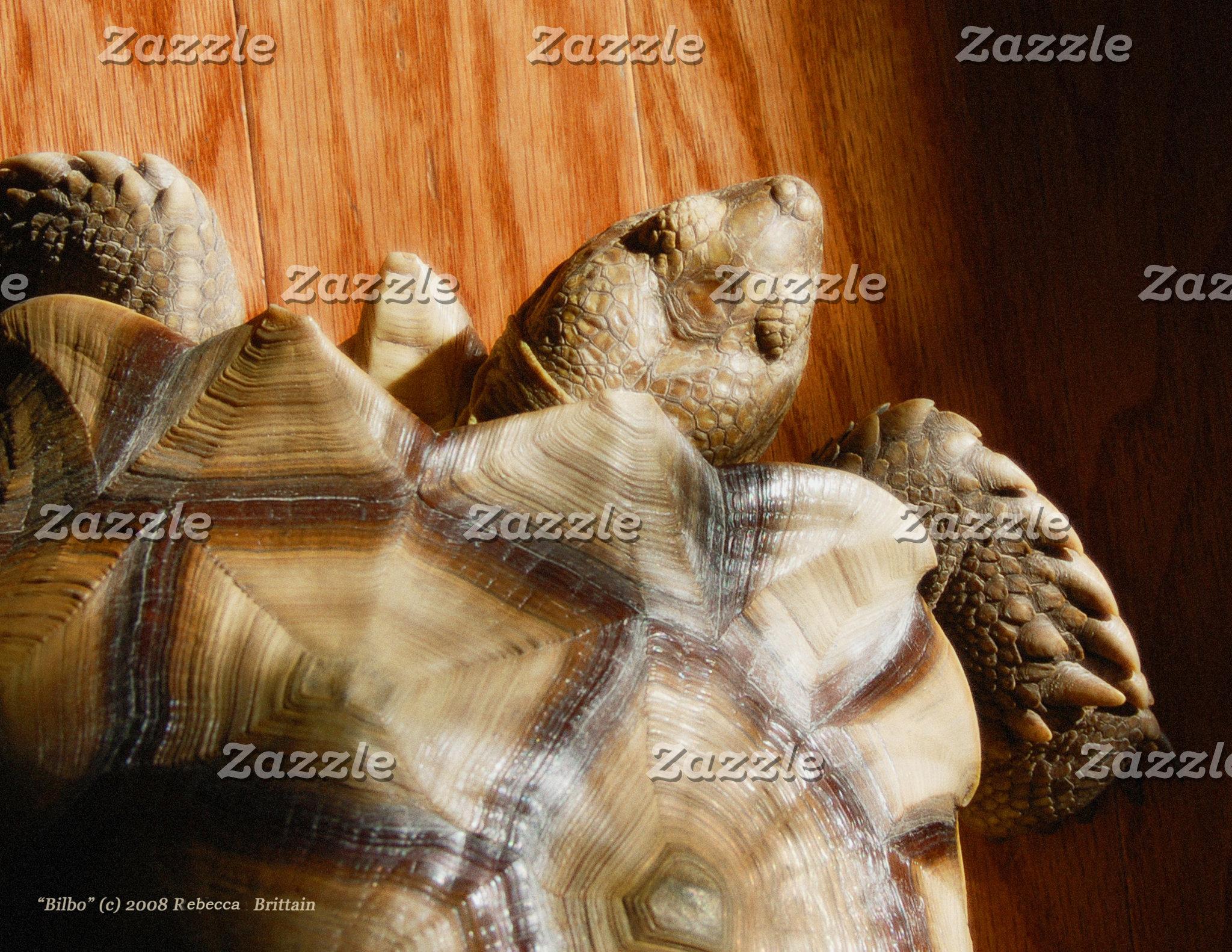 Just Turtles!