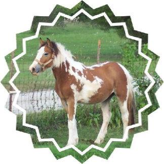 Cute Paint Pony