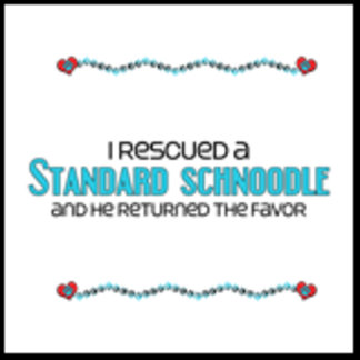 I Rescued a Standard Schnoodle (Male Dog)