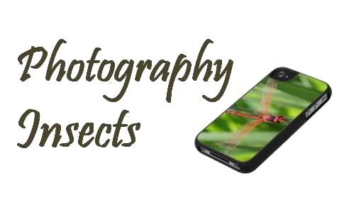 Photography - Insects