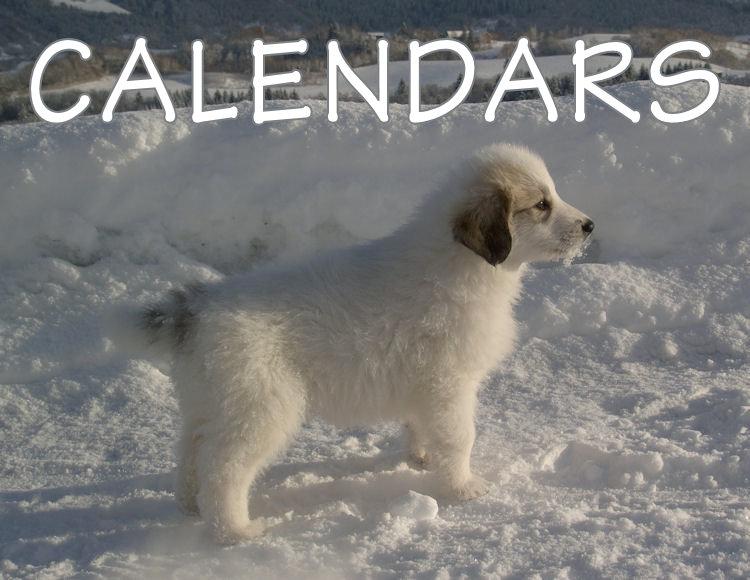 002 Great Pyrenees Calendars