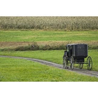 Amish buggy on farm lane, Northeastern Ohio,