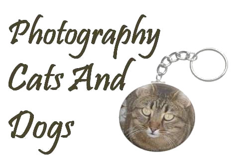 Photography - Cats And Dogs