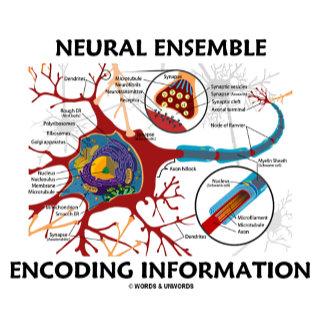 Neural Ensemble Encoding Information