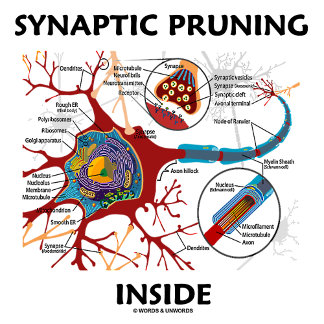 Synaptic Pruning Inside Neuron Synapse Humor