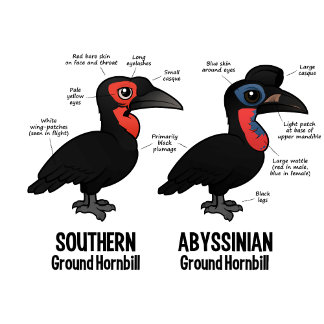 Ground Hornbill Statistics
